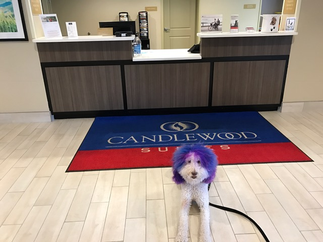pet friendly pet surgery Candlewood Suites