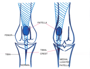 Diagram of Medial Patella Luxation