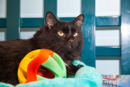 Adopt a Shelter Cat Month photo taken by Carla Nelms, used courtesy of the Richmond SPCA