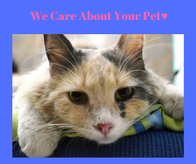 Important questions you must be able to answer for your pet!